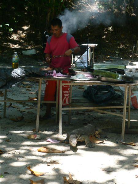 大蜥蜴嗅到烤肉味,下来找吃,一点也不怕人,看来是与工作人员混熟了。