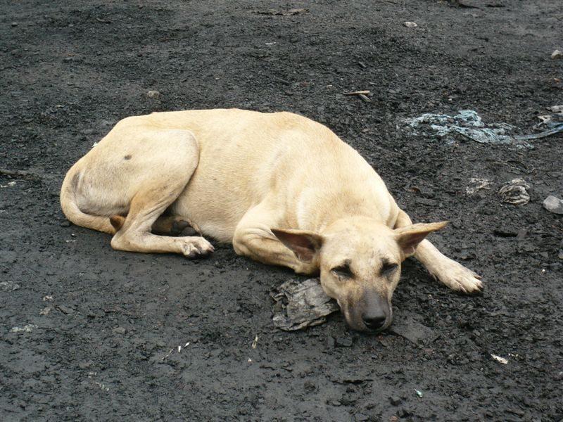 懒洋洋的狗狗。