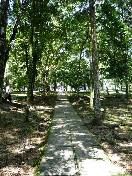 这条松树下的小径,当年常常走过。