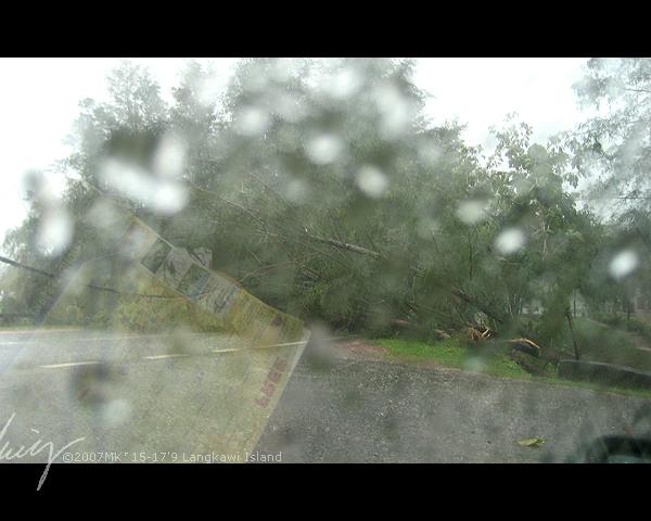 这几天虽然一直在下雨,但呆在岛上的最后一天,那个大风雨是前所未有的强劲,准备回去Kuah Town的半途中,竟然被风雨吹倒下的大树拦着去路,一时还有点惊慌失措,
