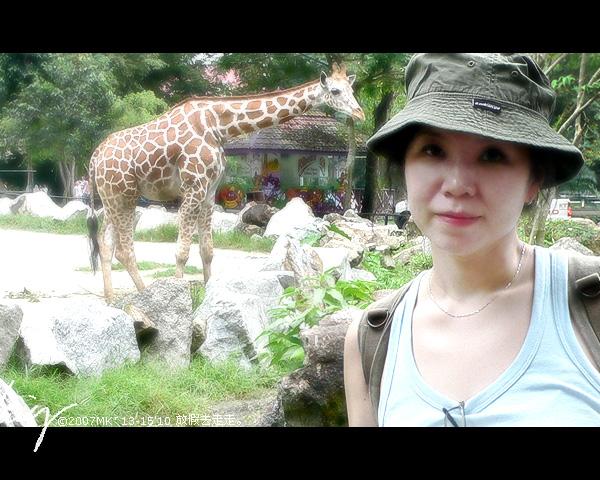 和长颈鹿合照。