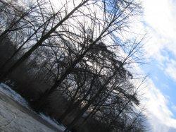 第一个冬雪